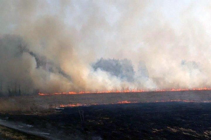 Огонь прошел почти 600 тыс. га леса в Сибири