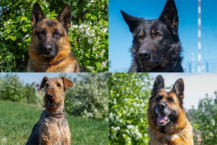 Омская полиция объявила конкурс на самую симпатичную собаку кинологического центра