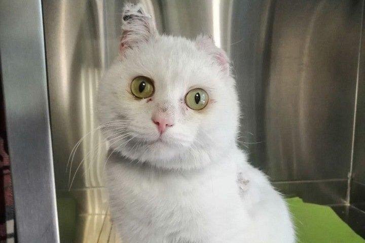 Кота облили химикатами и сбросили в уличный туалет под Новосибирском