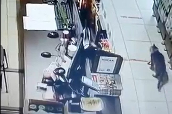 Кот вошел в магазин под Новосибирском и случайно вызвал группу быстрого реагирования