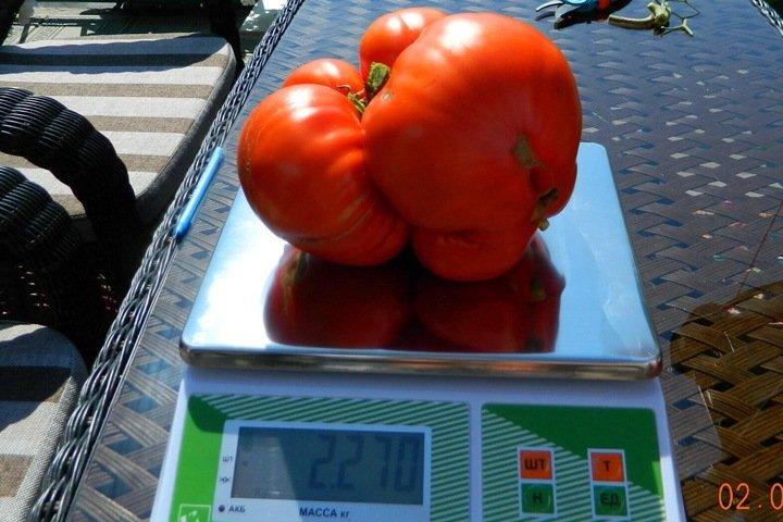 Красноярка выиграла автомобиль благодаря огромному помидору