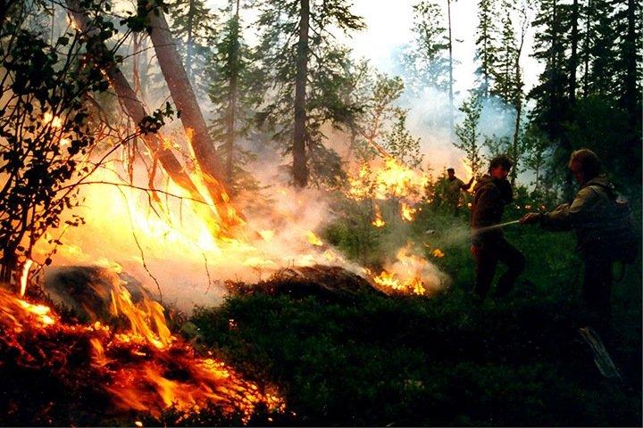 Огонь охватил почти 10,5 млн га леса в Сибири