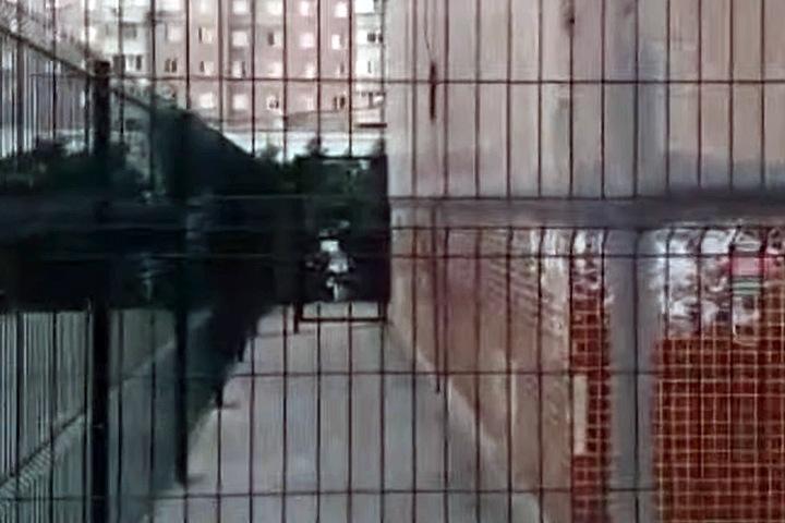 Глава новосибирского ТСЖ поставила личный двухметровый забор во дворе многоэтажки